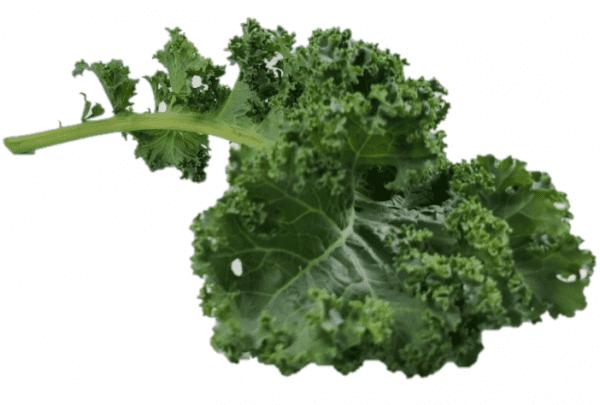"""""""Blue Kale leafs"""""""