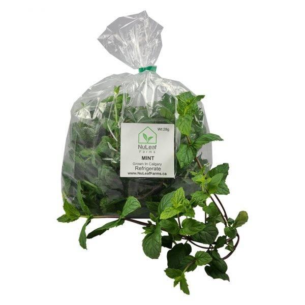 Fresh Mint grown in Calgary by NuLeaf Farms