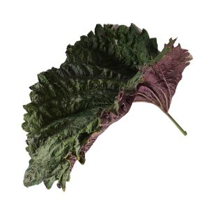 fresh shiso basil leaf