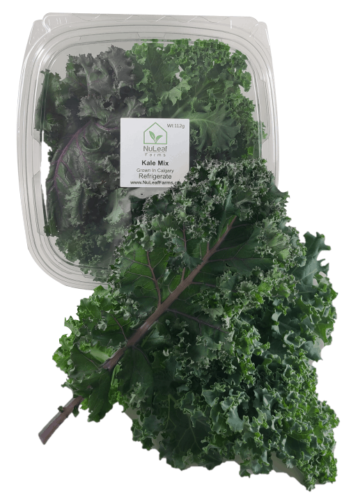 Mixed Kale in a Clamshell