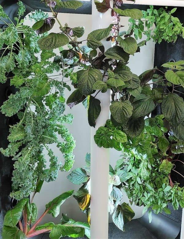 Just Vertical AEVA Unit overgrowing