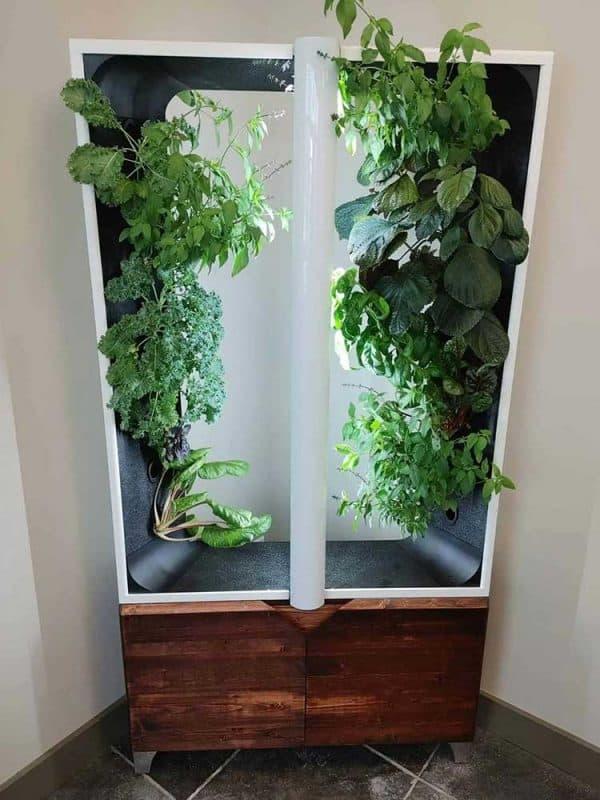 home grow AVEA