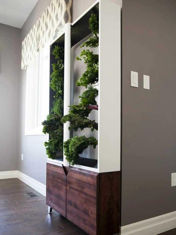 home grow design