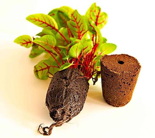 Starter Plant and Plug